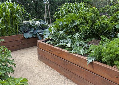 #GrowingCommunity – Learn how to start a family garden!